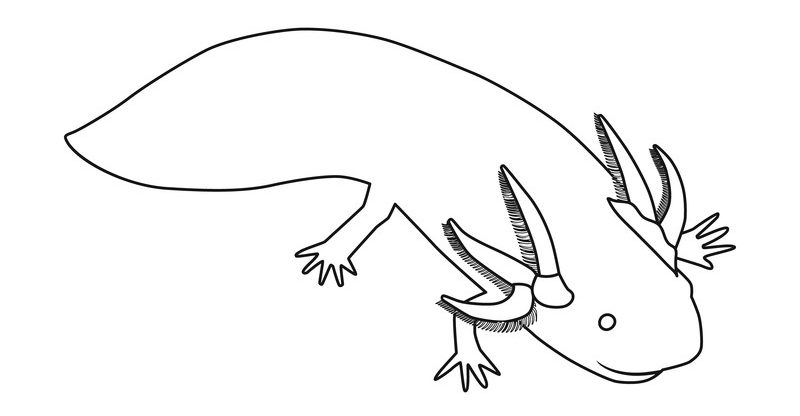 The Artful Axolotl